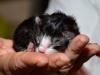 kitten5-cwurf-20131124a