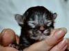 kitten6-cwurf-20131124a
