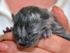 kitten7-cwurf-20131124a