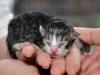 kitten8-cwurf-20131124a