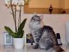 sherlock-2012_0126_210132aa