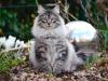 sherlock-2012_0320_181534aa