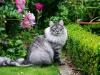 sherlock-2012_0610_175541aa